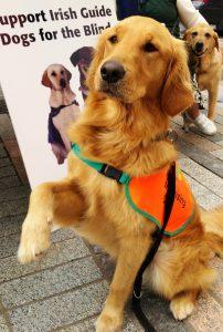 Fundraising Dog Vipp