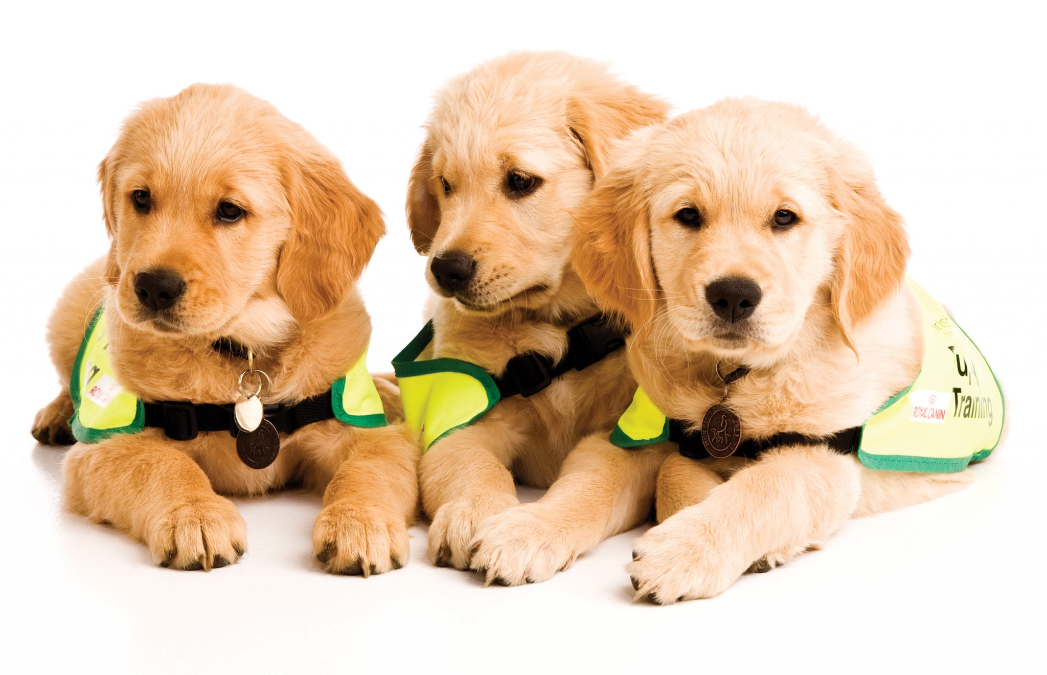 How Guide Dogs Are Trained Video